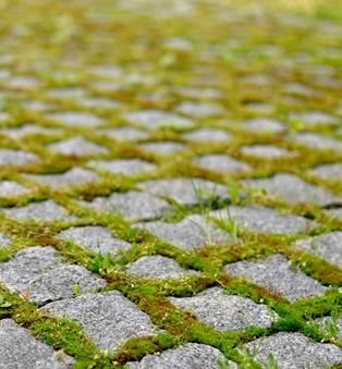Porphyry paving with moss. Timeless