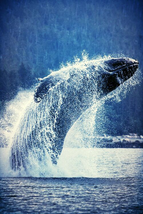 Famous Quotes (With images) Ocean animals, Ocean creatures