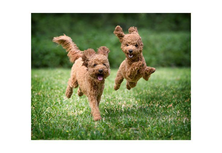 Breitsameter running and jumping.