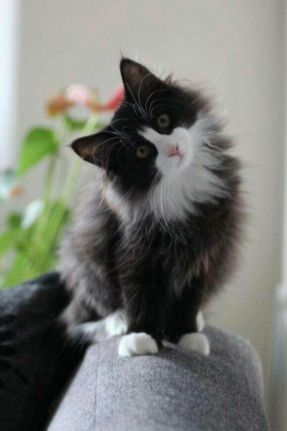 Pin By Candace Eaton On Kotki Kittens Cutest Pretty Cats Cute Cats
