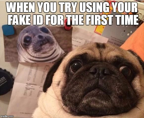 No, really....that's me | WHEN YOU TRY USING YOUR FAKE ID FOR THE FIRST TIME | image tagged in funny,meme,memes,awkward moment sealion,pugs,pug | made w/ Imgflip meme maker