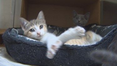 Houston-area animal shelters are constantly dealing with high intake and overcrowding. BARC'S capacity for cats is 550. They are now housing 595.