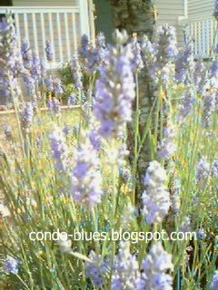 Make your own lavender essential oil.  To go with the lavender scrub project. :)