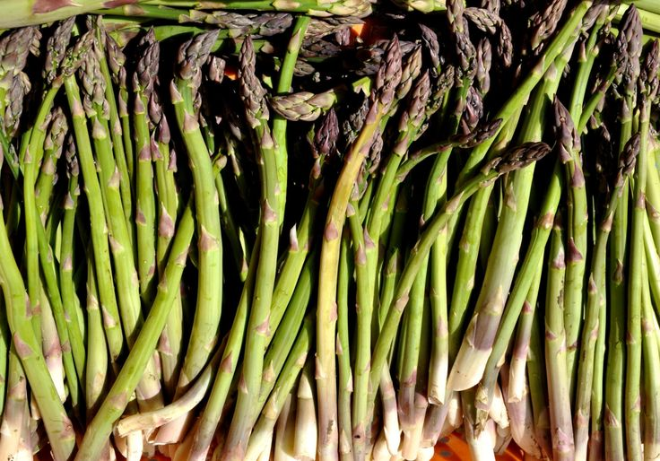 Organic Viking Asparagus Seeds - 20 Count-Super hardy sub-zero asparagus, great for northern locations with deep freezes. Very easy to grow. by DownrightNat on Etsy #Downrightnatural #Asparagus #AsparagusOfficinalis #OrganicAsparagus #AsparagusSeed #GardenSeed #Perennial #Organic #Seed #Gardening #Nongmo #OrganicVegetable #Bulk OrganicSeed #BulkVegetableSeed
