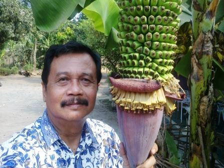 This banana is located at the backyard of Asmuni Restaurant in Mojokerto, Jawa Timur, Indonesia  http://happyphotograph.com/amazing-picture/the-biggest-banana-in-the-world