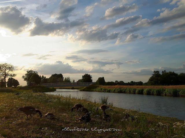 Allochtonka - życie ekspatki w Holandii: Holandia 6 lat później