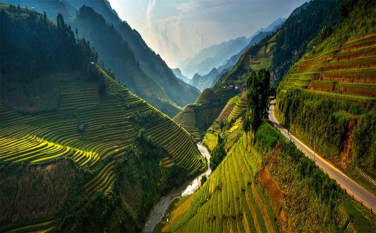 Rice terraces Of Northeast Vietnam.