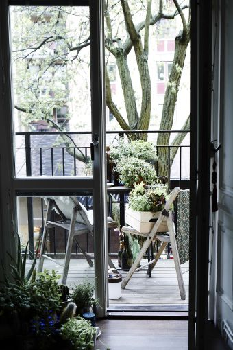 Take your houseplants to the balcony to receive a breath of fresh air