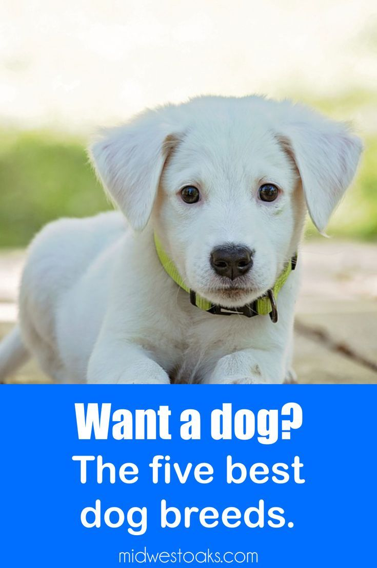 Most Popular Dog Breeds Which One Is Best For You Dog Breeds Most Popular Dog Breeds Best Dog Breeds