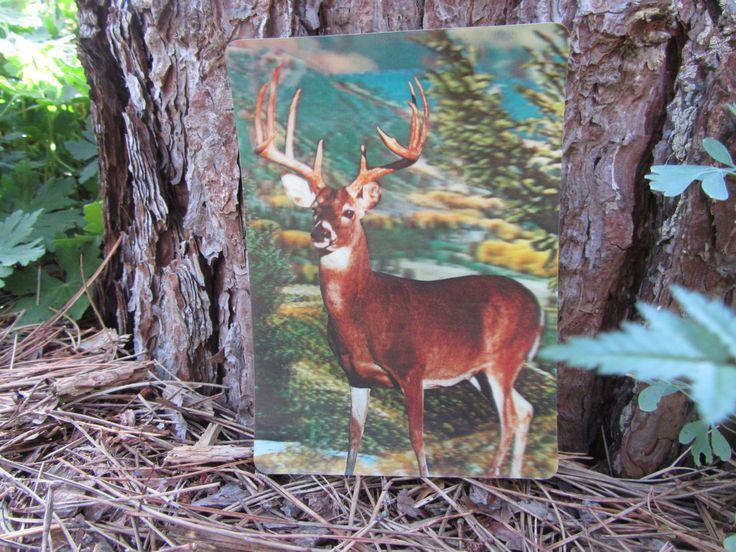 3d postcard deer photo white tailed buck hunter humor gag