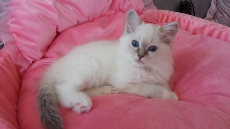lovely blue mitted girl
