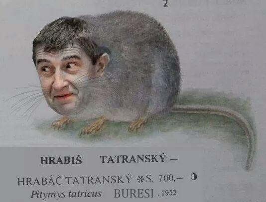 Hrabiš tatranský