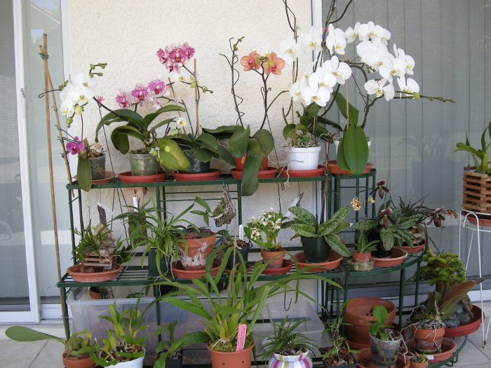 Orchids Garden Design botanical eco design enid a haupt conservatory green design living wall My New Orchid Garden