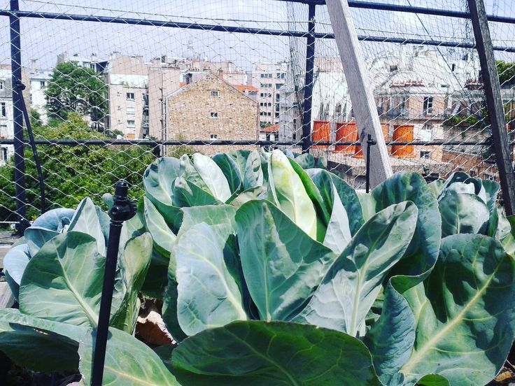 Visites commentées par nos chercheurs du potager expérimental sur les toits d'AgroParisTech. ©A.Utzeri - Musée du Vivant - AgroParisTech – à AgroParisTech.