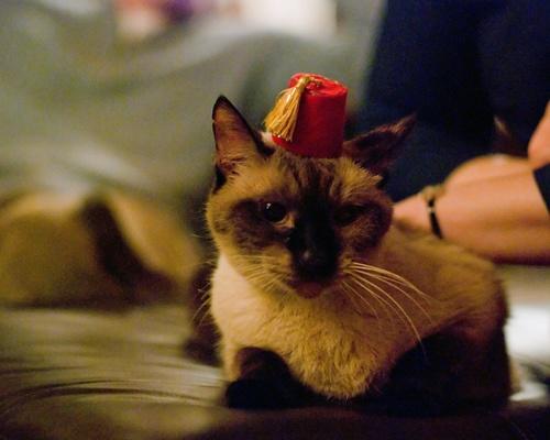 45 best images about Fezes on Pinterest | Bette davis ... Fezzes Are Cool Cat