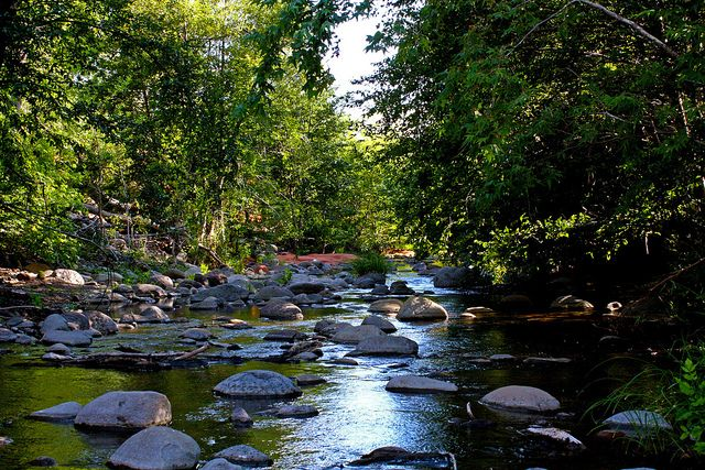 Tree lined stream with boulders on Wet Beaver Creek