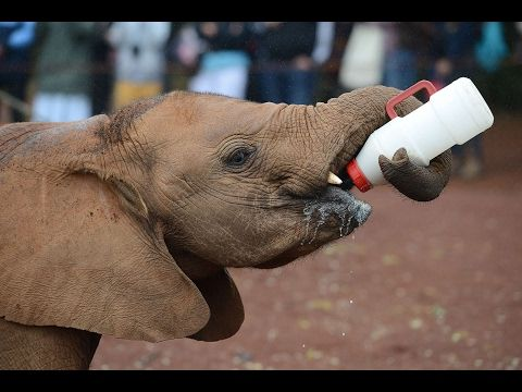Funny Baby Elephant - A Cute And Funny Baby Elephant Videos Compilation 2017 - YouTube