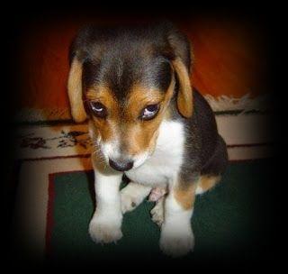 """Educazione, comportamento e bon ton del cane in società: Da """"Il Cane mi tiene il Muso!"""" IL CANE SI OFFENDE..."""
