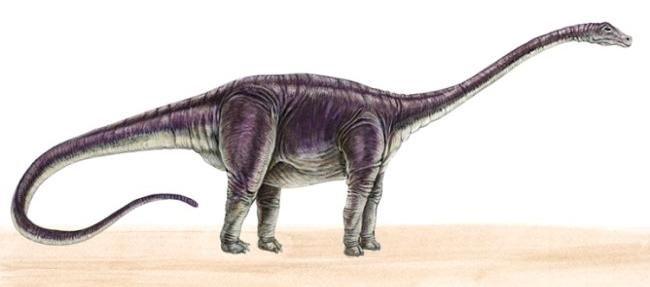 13 best dinosaur herbivore images on pinterest dinosaurs - Dinosaure diplodocus ...