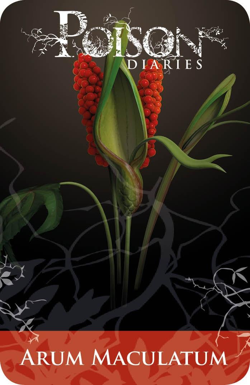 Poisonous Plants:  Arum Maculatum.