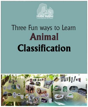 Animal Classification Activity-- Classification Hopscotch looks like a good idea!