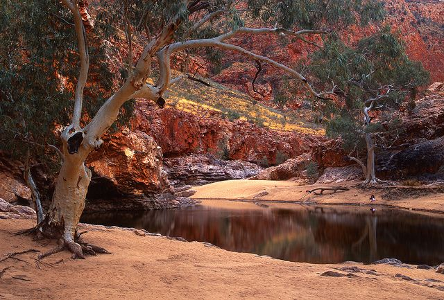 Ormiston Gorge, Northern Territory. You really have to click this photo to get a sense of scale - there's someone sitting under the tree on the far bank.