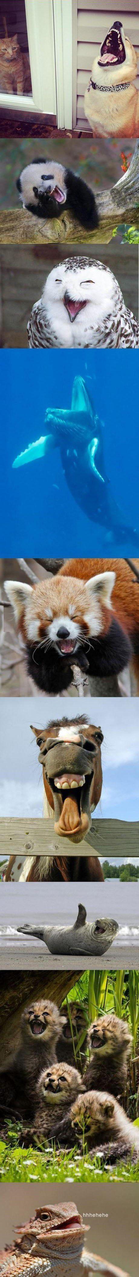 Wenn Tiere Happy sind