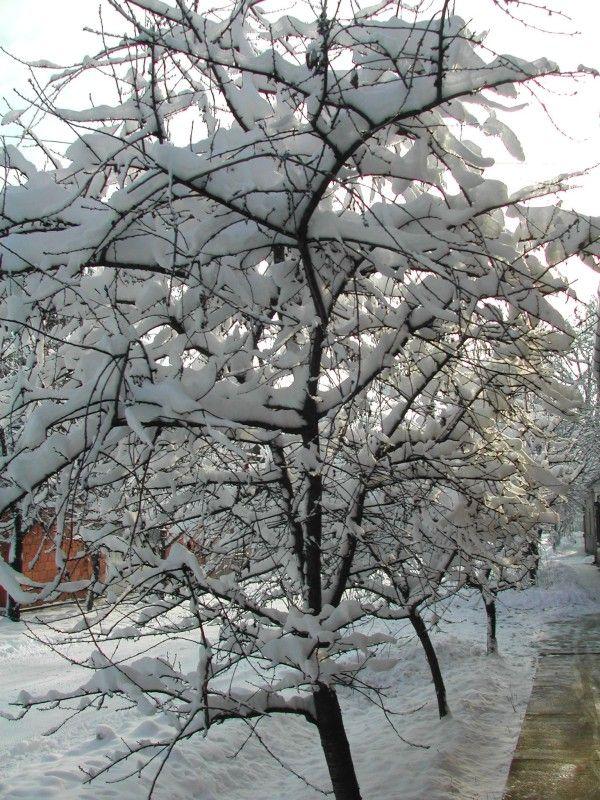 Tél - L'Inverno (Der Winter, Winter)