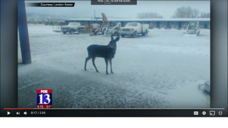"Two Families Upset after Utah Relocates ""Jerky"" the Deer Again Preview Image"