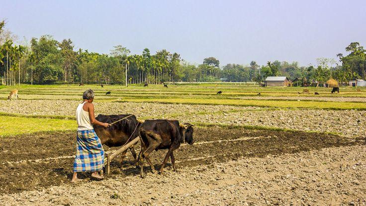 El lungui: la falda que visten los hombres en la India
