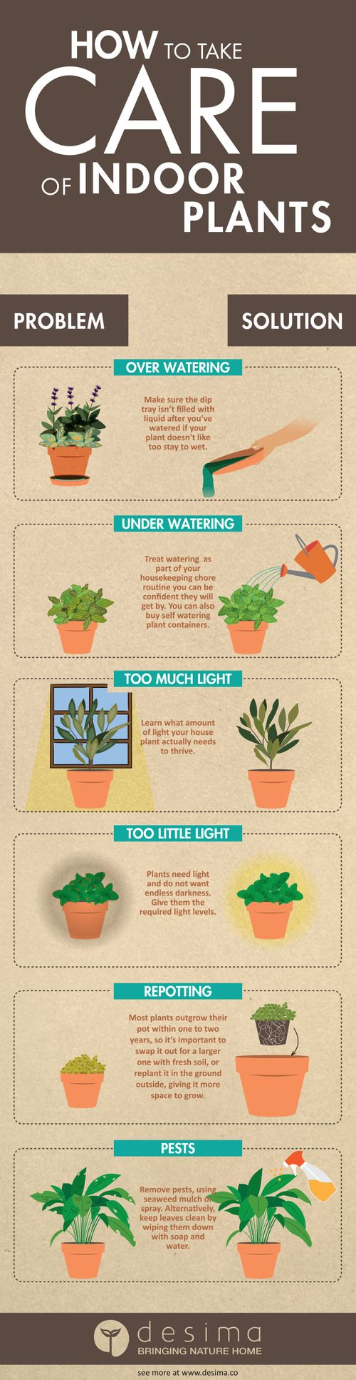 Infographic on how to take care of indoor plants.                                                                                                                                                                                 More