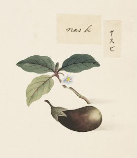 Naturalis Biodiversity Center - RMNH.ART.622 - Solanum melongena - Kawahara Keiga - 1823 - 1829 - Siebold Collection - pencil drawing - water colour