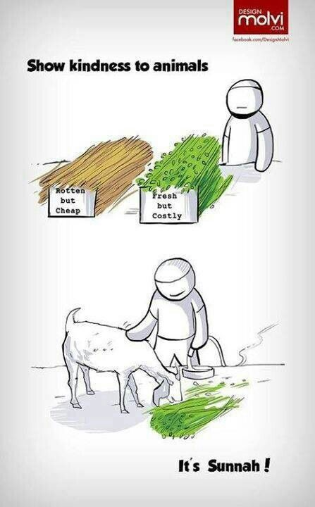 Kindness for the animal is Sunnah broh...