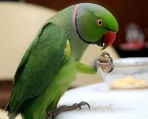 A talking parrot helped UP Police in identifying the murderer!