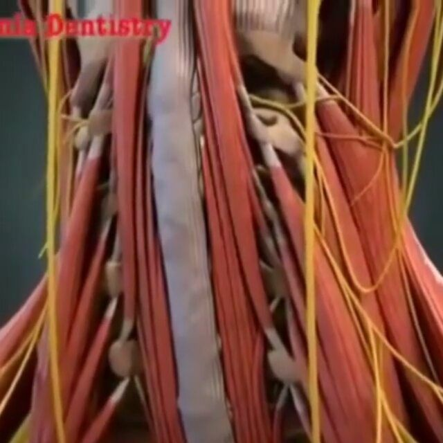 Head And Neck Anatomy Amazing Video From Albaniadentistry Follow