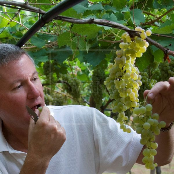 Grapes talk to Mark and he listens!