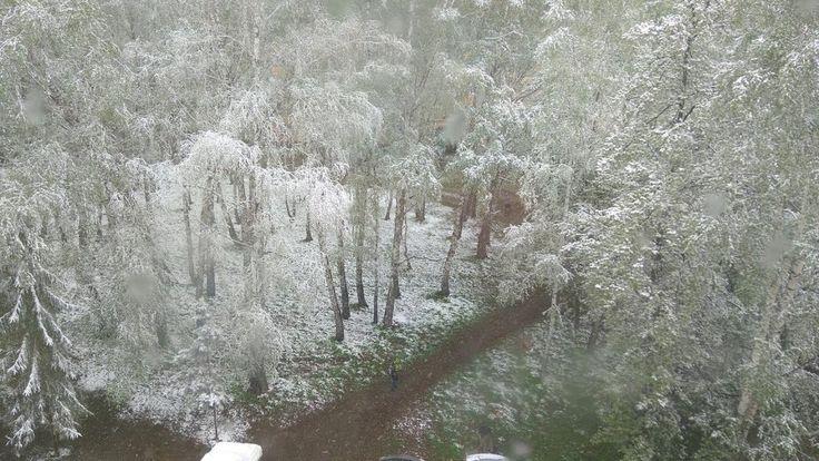 17 мая.... снег, а скоро лето! В Сибири зима!