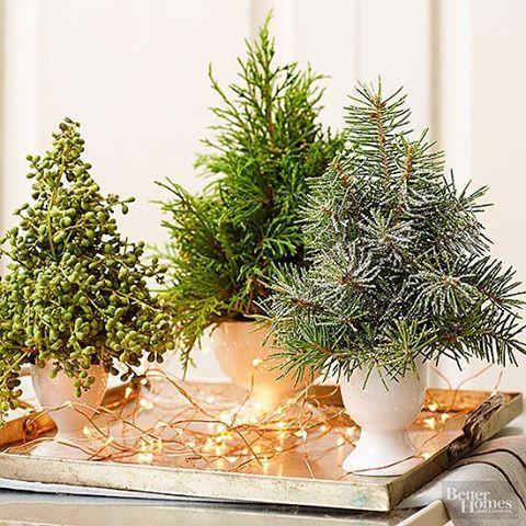 Make your own mini trees for the table with an oasis and some green branches  Gör en egen liten gran att ha exempelvis som bordsdekoration - easy peasy med en oasis och valfria gröna grenar! Enkelt men snyggt. Bild: Better Homes #jultiderna #jultid #jul2016 #juldekor #juldekoration #juldekorationer #scandinavianchristmas #swedishchristmas #christmasdecorations #christmasdecorating #christmasdecor #minigran #julgran #julgranar #julgransdekorationer #julpynt #julbord #bordsdekor #oasis #b...