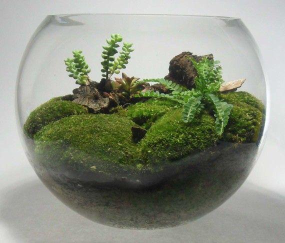 44 best images about glass bowl terrariums on pinterest. Black Bedroom Furniture Sets. Home Design Ideas