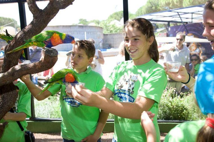Vuelven los Campamentos de verano a Zoo Aquarium de Madrid