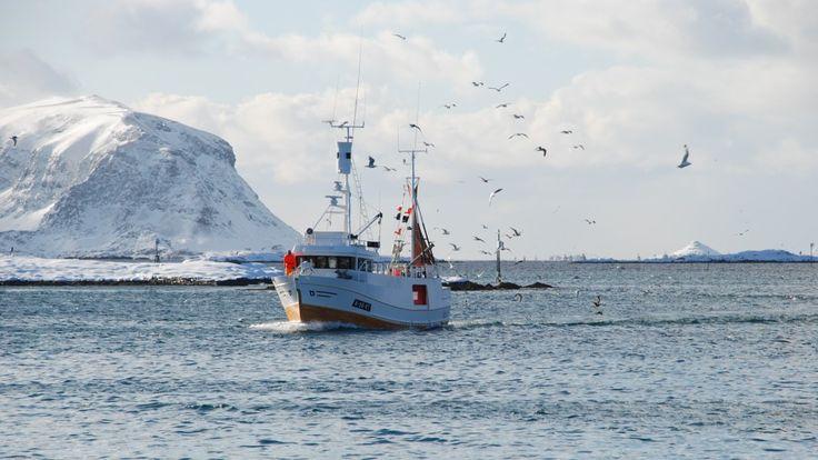 Næringskomiteen går mot flere av regjeringens forslag til ny fiskeripolitikk.