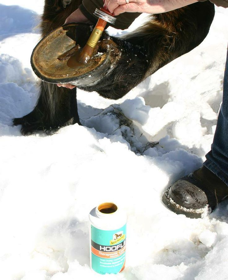 Brush Hooflex on your horse's hooves in winter - it will help prevent the snow from sticking!