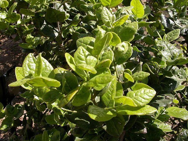 Remedios caseros para higado graso - Alcachofa etc .