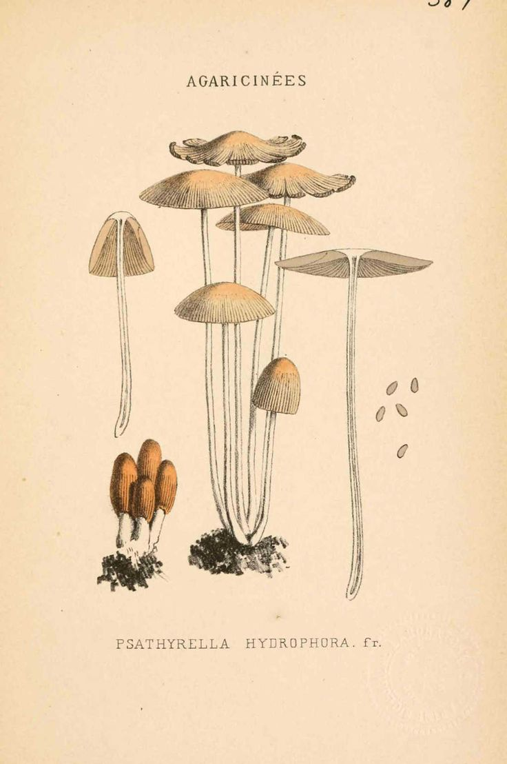 Sketches from Fiona Widdershins' commonplace journal including early variations of Medusoid Mycellium