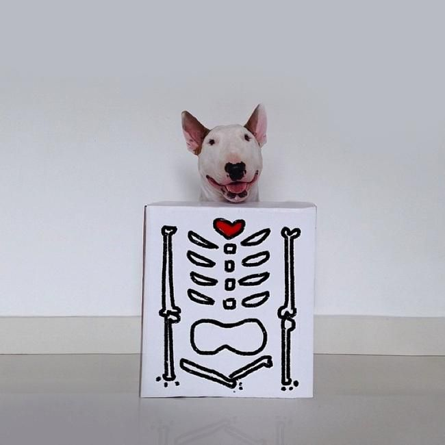 Jimmy Choo, the beautiful bull terrier: a series of fun illustrations made by his owner Rafael Mantesso (VIII) l #Instagram #doodleart #photography