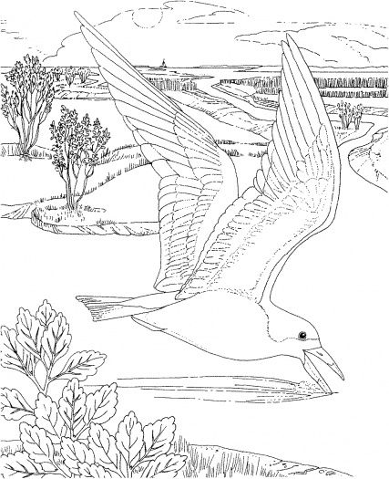 seagull in flight coloring pages - photo#10