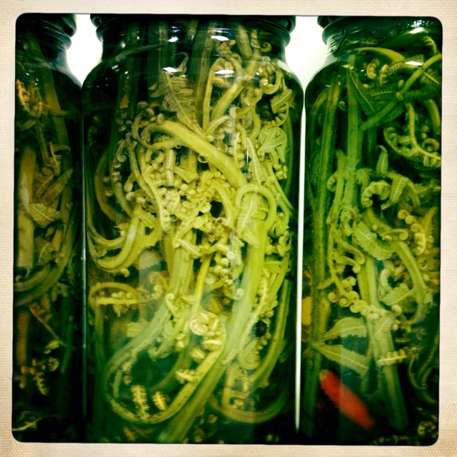 Pohole fern pickles! In the Maui Preserved kitchen today ...