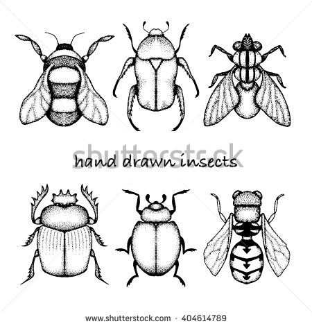 Doodle #insects: #fly , #ladybug , #bumblebee , #wasp, #bee, #scarab #pointillism