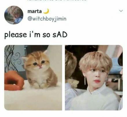 Super cats memes laughing so hard sad ideas – BTS