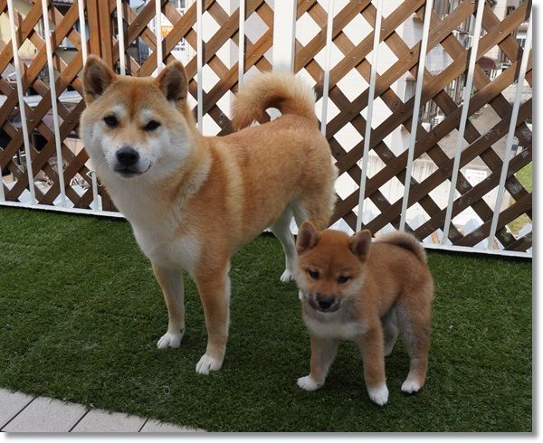 This could be Doc and his new brother or sister.
